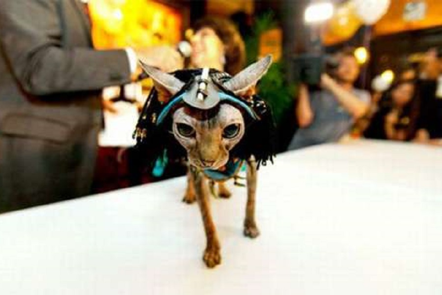 Кошачьи модники _3 new-york-cat-fashion-show.jpg