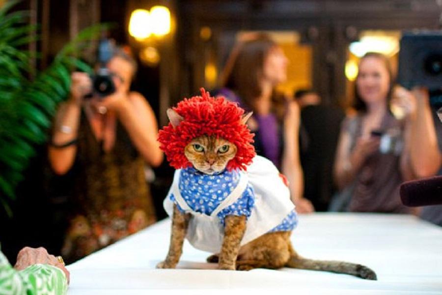 Кошачьи модники 1 2010 cat fashion show in NY.jpg