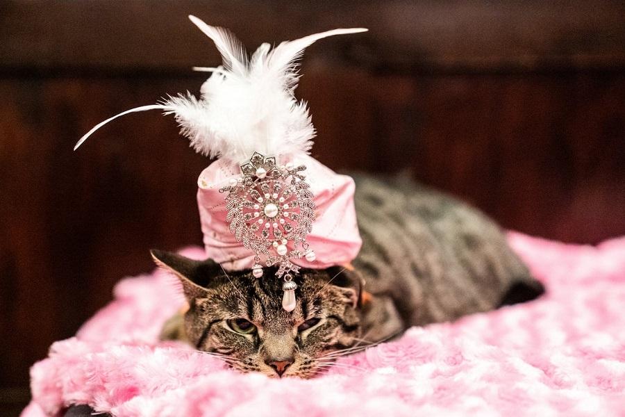 Кошачьи модники 3 Cat fashion show in NY 2019.jpg