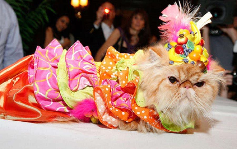 Кошачьи модники 5 85293_10_800.jpg