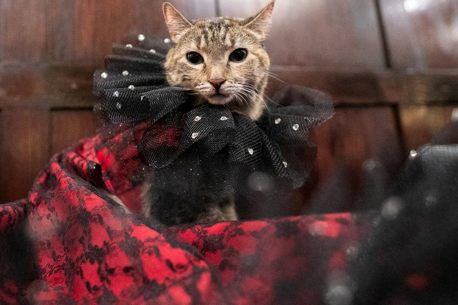 Кошачьи модники 8 NYCatShow020819a-14.jpg
