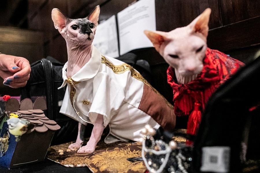 Кошачьи модники 11 NYCatShow020819a-12.jpg