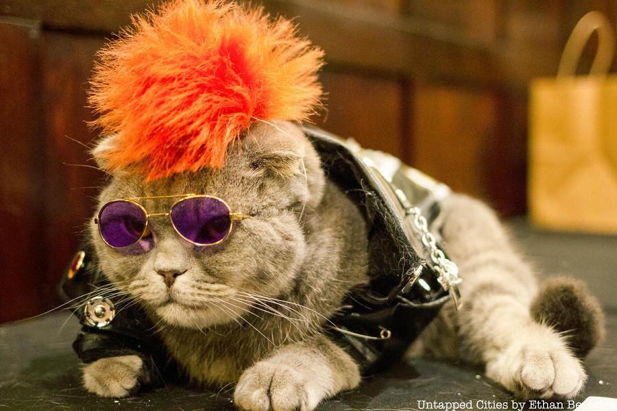 Кошачьи модники 12 Algonquin-Cat-Fashion-Show-Mayors-Alliance-for-NYCs-Animals-4-1.jpg