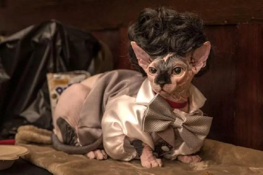 Кошачьи модники 13 cat-fashion-show-credit-mark-mcqueen-1.jpg