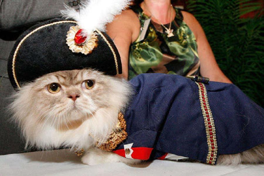 Кошачьи модники 16 85293_2_800.jpg