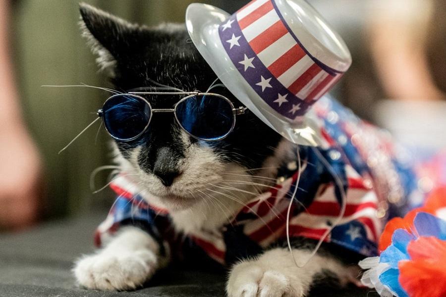 Кошачьи модники