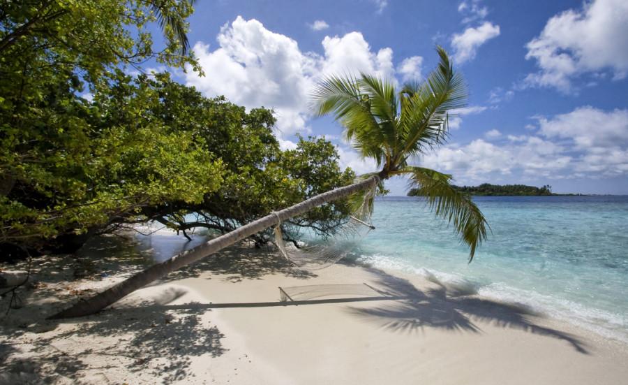 Мальдивские виды