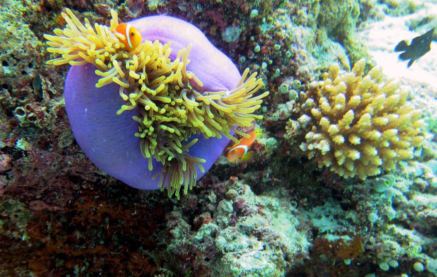 Мальдивы. Подводный мир