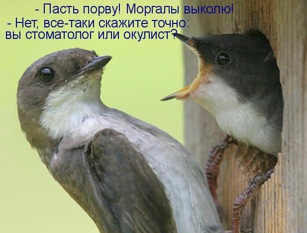 https://ic.pics.livejournal.com/semigor33/35422838/28747/28747_900.jpg