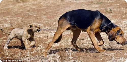 пес и скимен