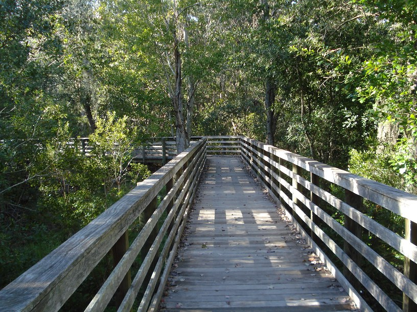 Boardwalk / bridge over Shingle Creek.