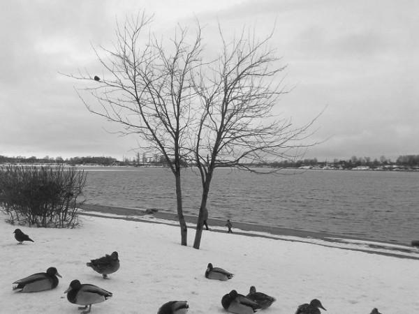 утки у реки