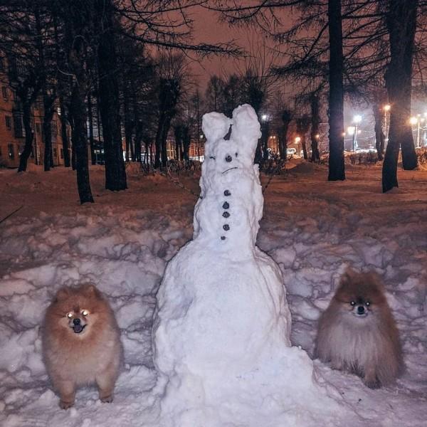 снеговик и собачки