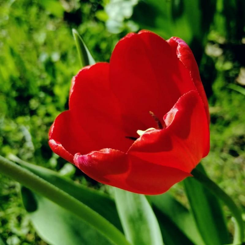 Доверила узбечке тюльпаны посадить...