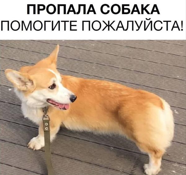 Пропала собака. Помогите найти!!!
