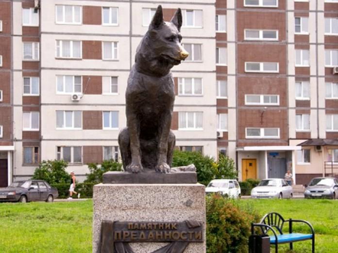 Памятник преданности: история немецкой овчарки из Тольятти