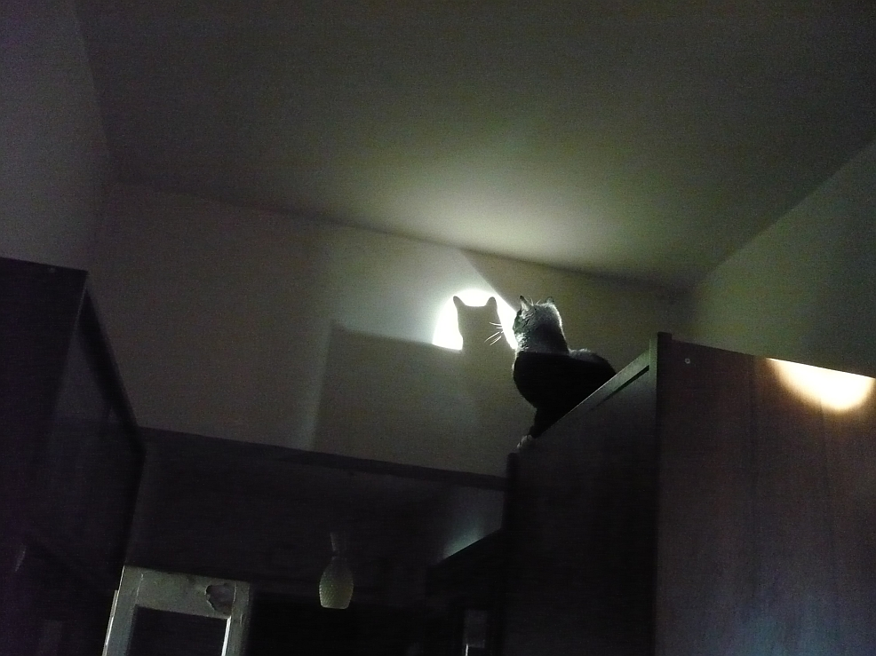супрем кот