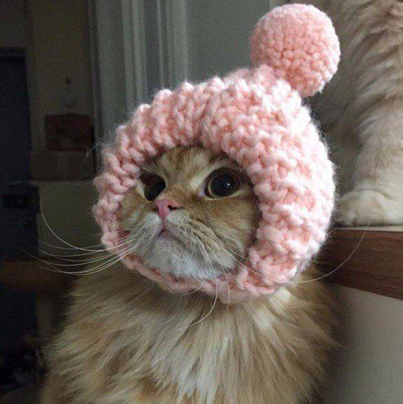 Оставаться красивым в зимней шапке — высшее мастерство