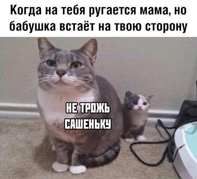 Не трожь Сашеньку...