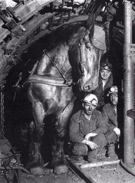Шахтёры и их рабочая лошадь в забое. Франция, 1970 год