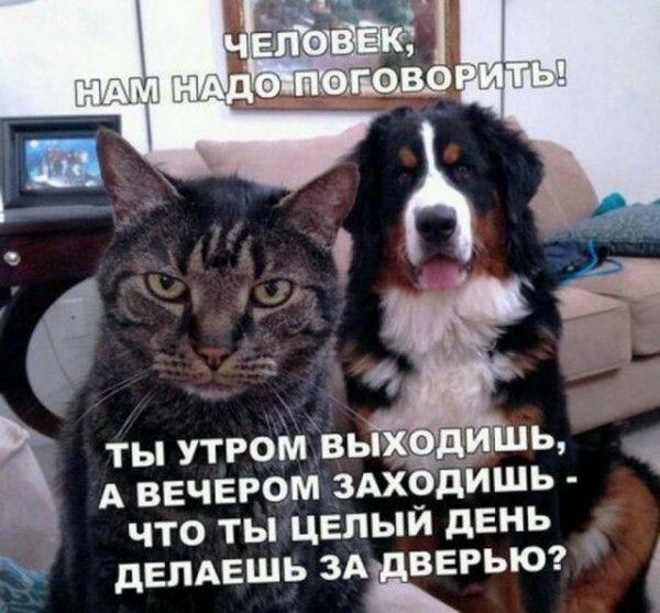 Отвечай!