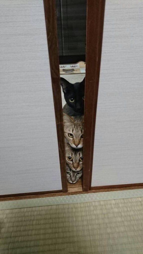 Мы следим за тобой...