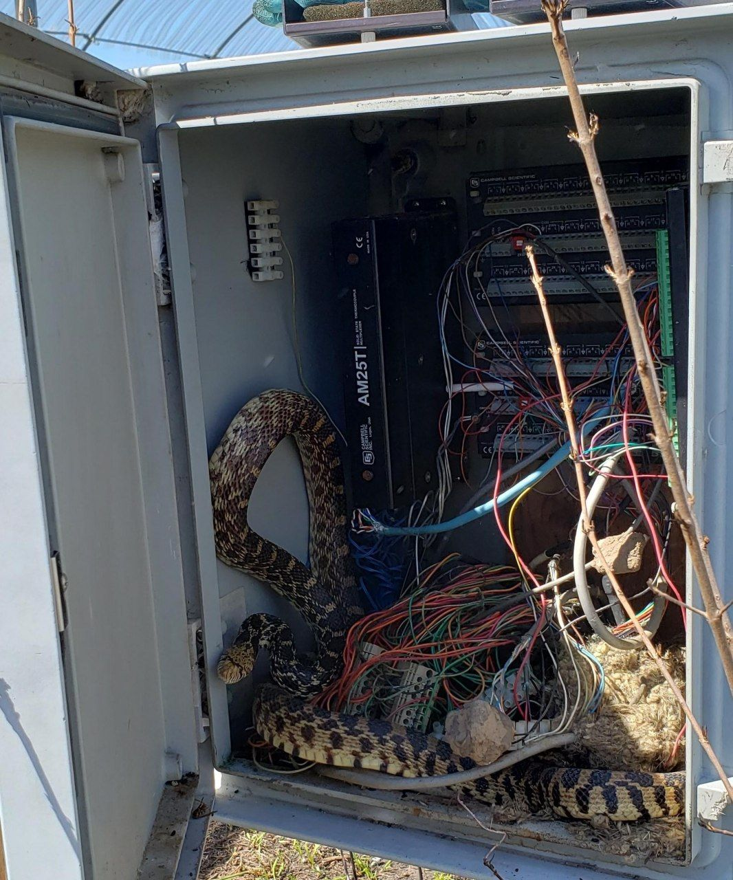 Открываешь, такой, телекоммуникационный шкаф, а там...