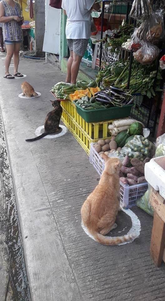 Коты тоже соблюдают социальную дистанцию