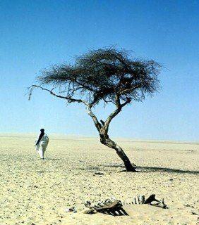 Самое одинокое дерево в мире