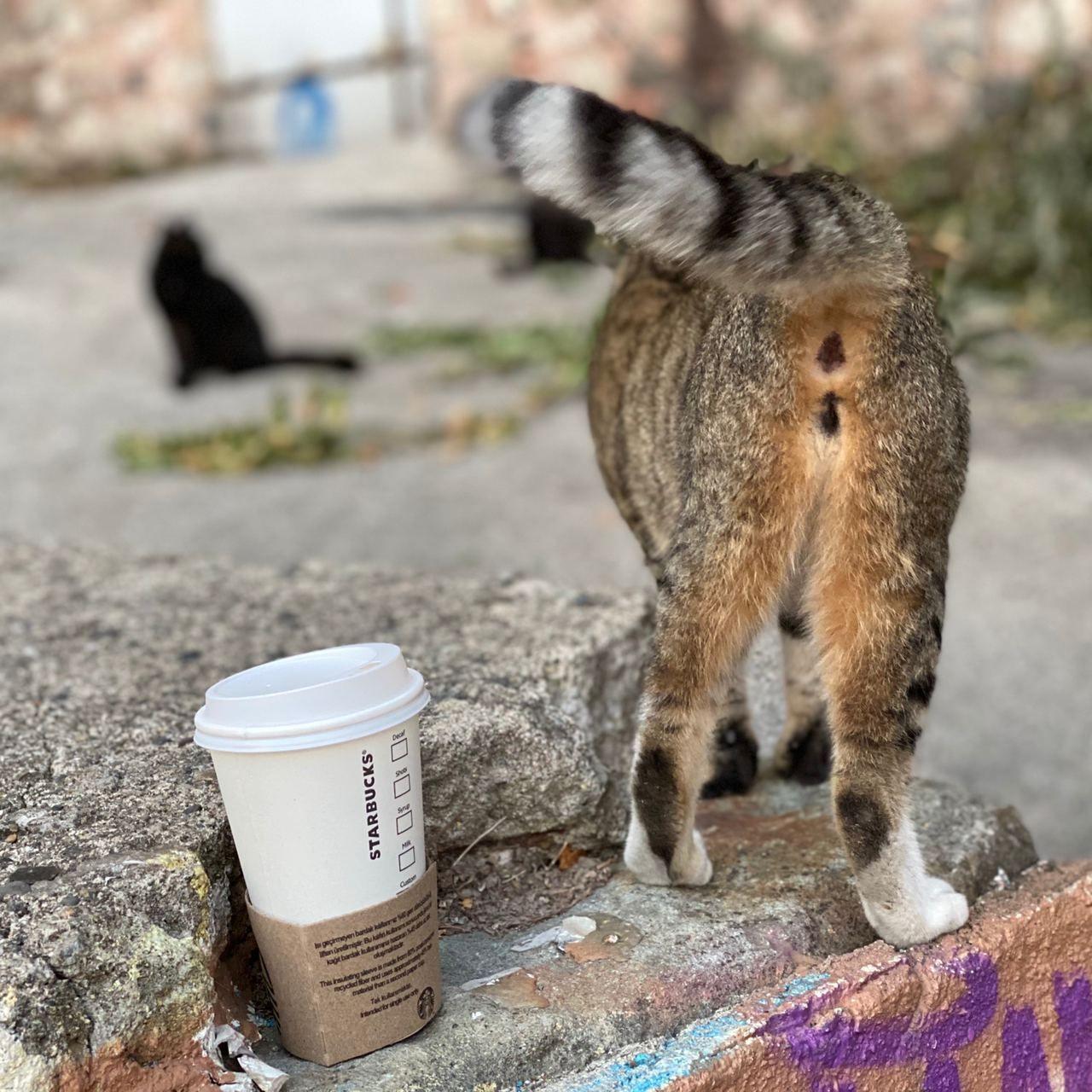 И кофе своё себе оставь