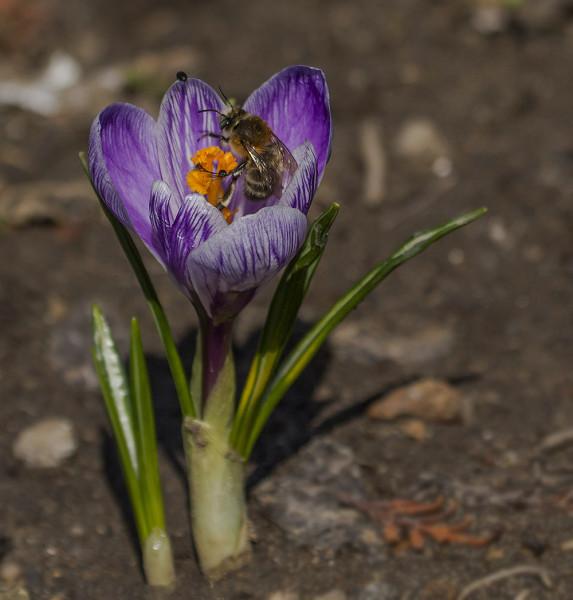 Еще раз про весну!