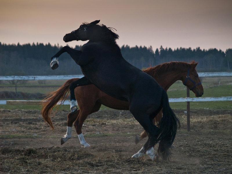 horses_by_aramisaramis