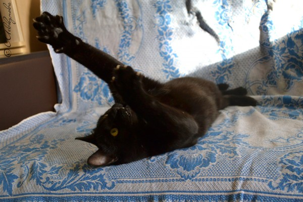 Кот изюм