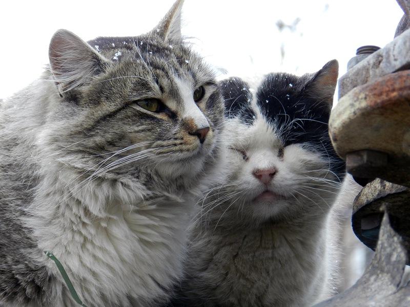 два товарища