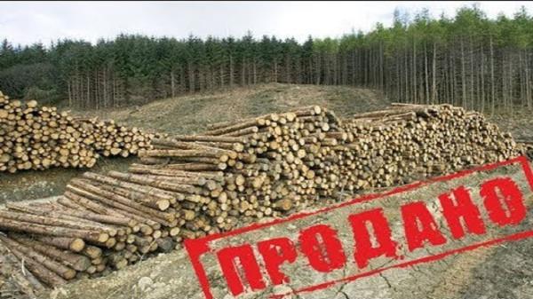 Запретить продавать лес в Китай! Назрело!