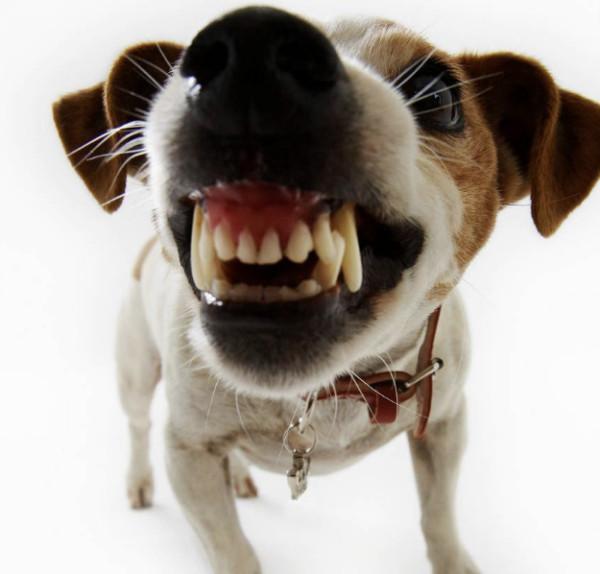 Ваша собачка укусила? Вам светит тюрьма!