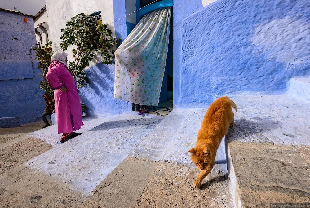 Африка, Марокко, Шефшауэн, город, люди, кошки