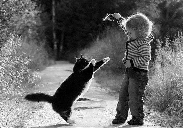 60472_1373972196130_2542923_n игра с котом