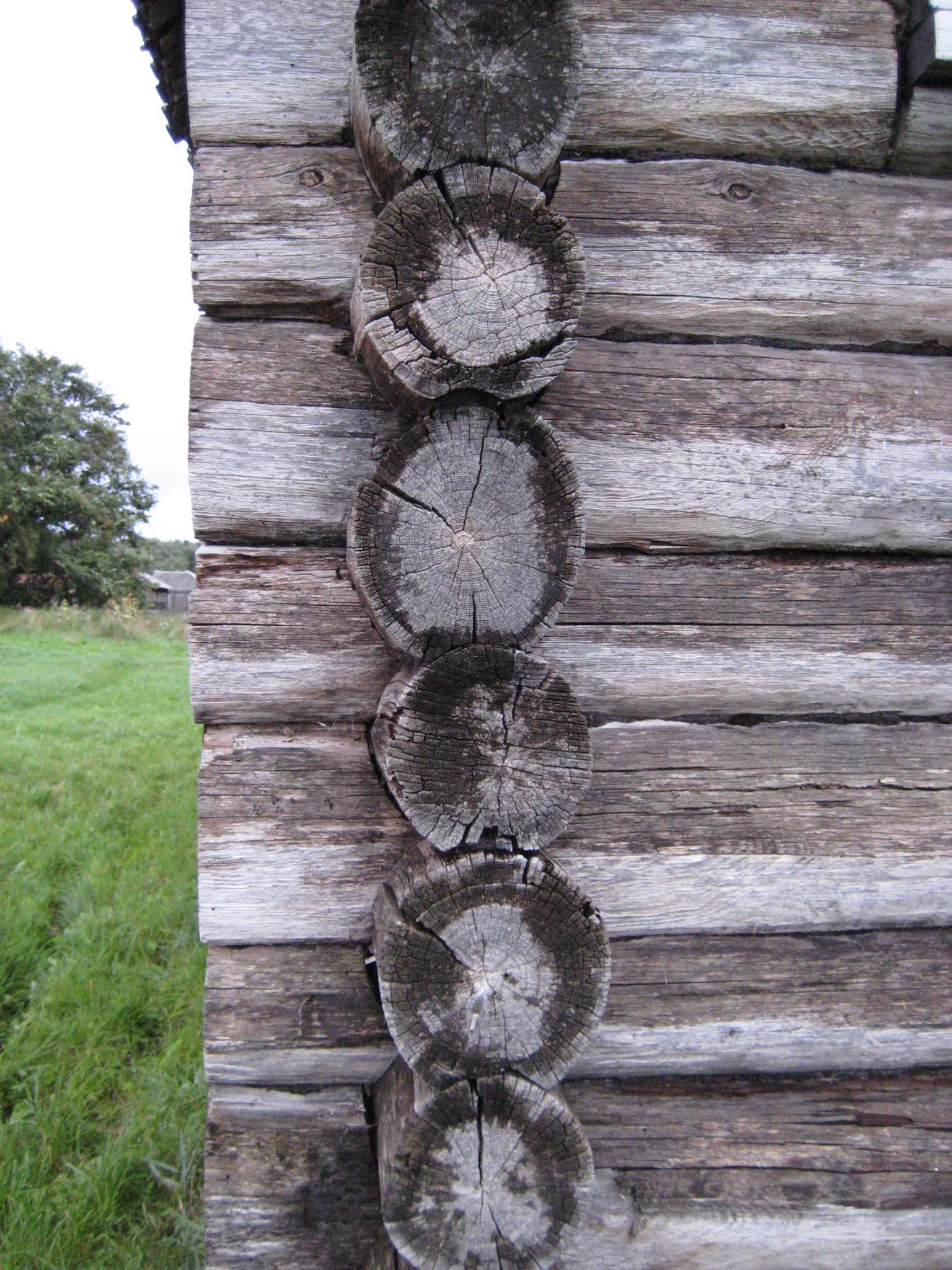 После дождя на торцах старого дома хорошо видна разница между рыхлой заболонной древесиной, как губка впитывающей влагу, и засмоленной сердцевинной древесиной, не пускающую влагу внутрь. Кстати, это одна из причин, почему в странах западной Европы и Скандинавии, так популярны здания из бревен отесанных на два канта: таким образом плотники еще при строительстве стесывали слабую заболонную древесину, обнажая более стойкую ко внешним воздействиям и грибам сердцевинную. Это позволяло отсрочить начало резрушения древесины сруба.