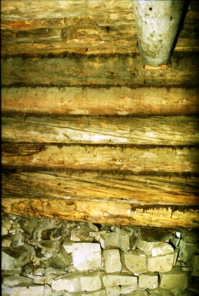 Южная стена в подклете Покровской церкви. Поверхность бревен сильно повреждена. Церковь спустя примерно сто лет после строительства была перестроена, перебрана полностью, прежде чем приобрела нынешний вид. Легче всего этот фокус, по-моему, мог получиться, если южная стена поменялась местами с северной и т.д. (Фото 1987)
