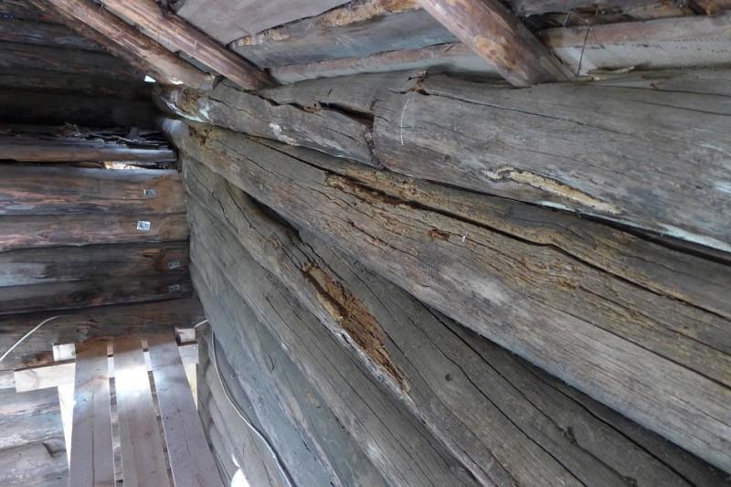 Длительные протечки вызвали серьезные повреждения гнилью нижележащих деревянных конструкций. В верхнем бревне также виден поперечный пропил снизу, для плотной посадки бревна на место.