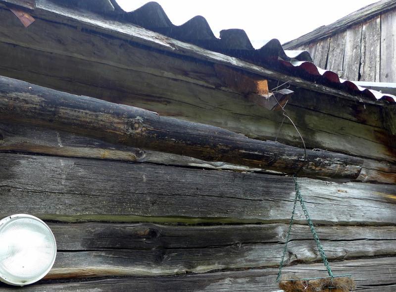 ...а при осмотре снаружи выяснили его причину. Неудачно размещенный желоб водостока расплескивал дождевую воду на стену, постоянно ее увлажняя. И вода на протяжении многих лет подпитывала грибы гнили. Пластинчатый гриб не такой страшный разрушитель, как домовой гриб из подпола. Поэтому прочность пораженной древесины пока достаточна, чтобы не менять подгнивший участок. Достаточно будет обеспечить нормальный водоотвод, просушить пораженный участок и счистить плодовые тела грибов (это уже чисто из эстетических соображений).
