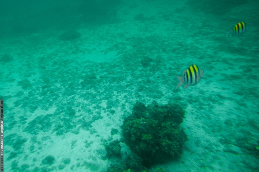 20130902_JAMAICA_261