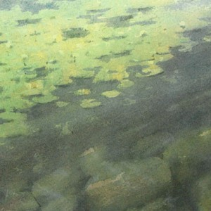 Water lilies and the underwater stones
