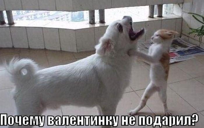 prikoly-i-smeshnye-kartinki-ko-dnju-svjatogo_1