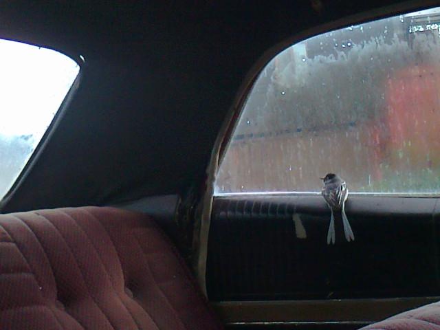 Всегда знал, что у этих машин есть душа. Понтиак St. Laurentian 1966/