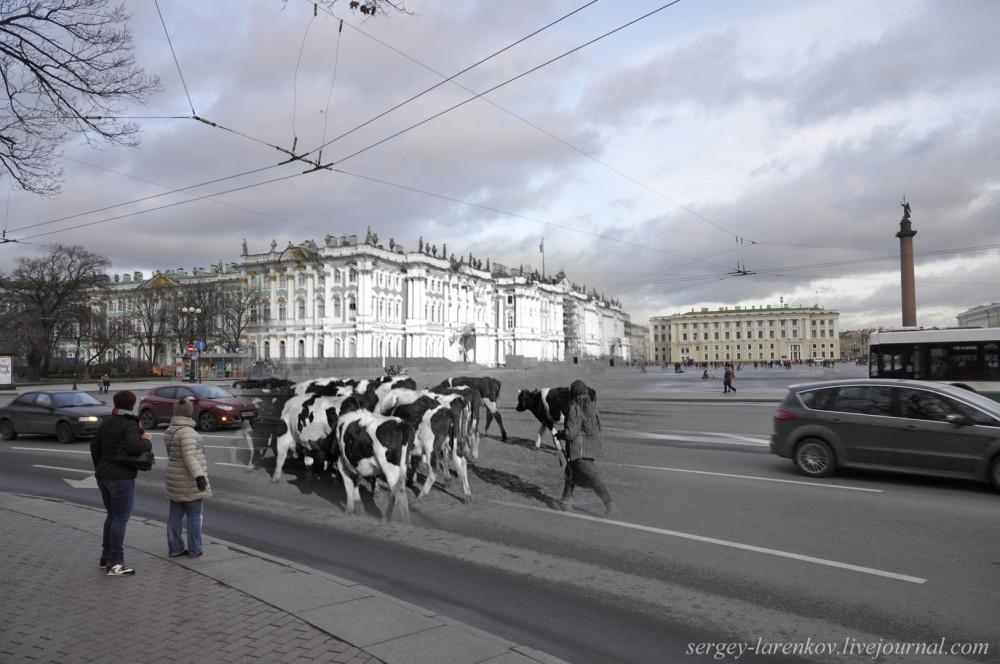 245. Ленинград 1942-2013 Перегон скота на Дворцовой.sL