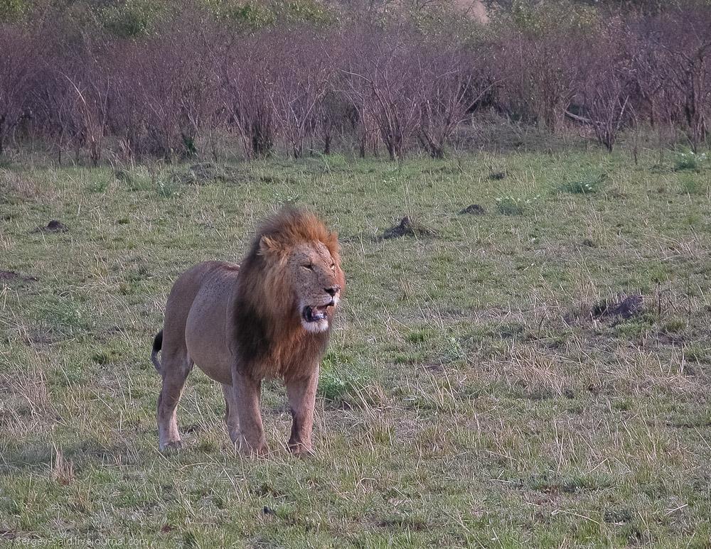 Africa 035