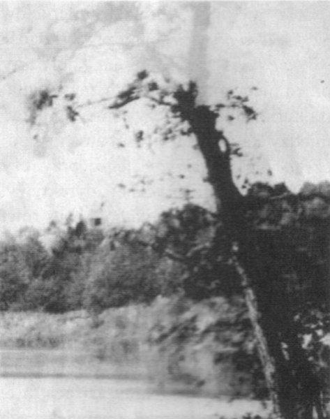 сущность дерева