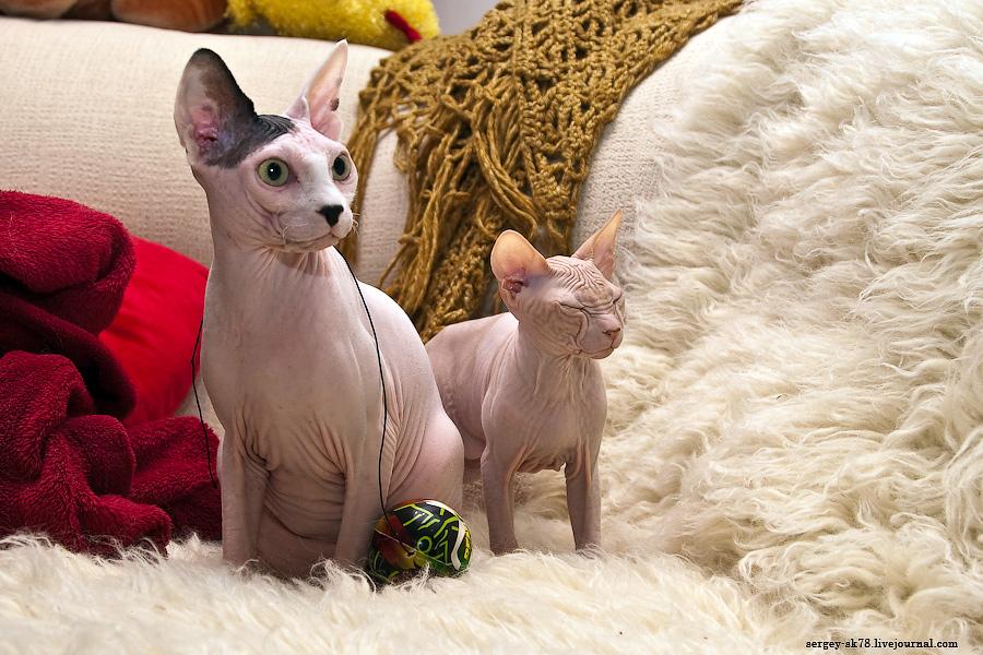 Говорящие коты)))